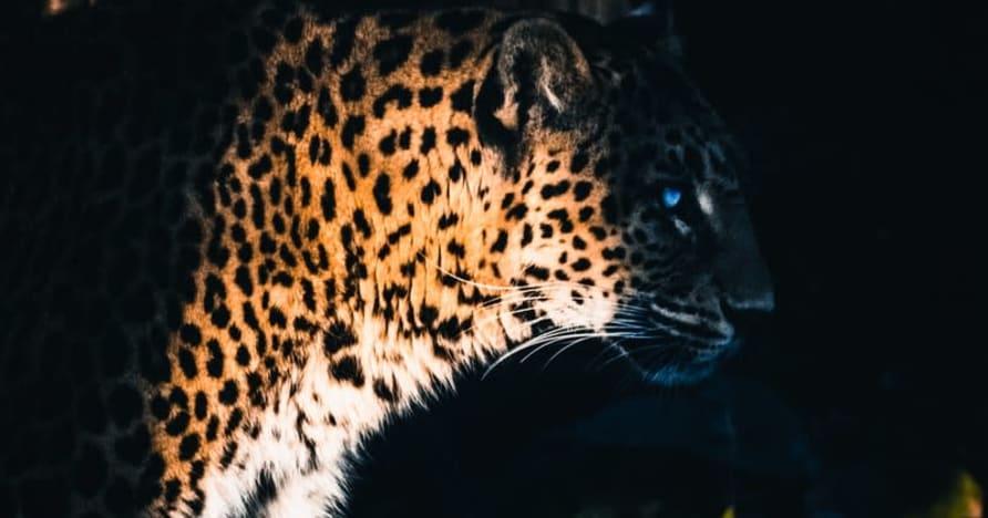 Yggdrasil 파트너 ReelPlay, Bad Dingo에서 Jaguar SuperWays 출시